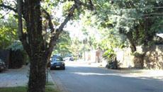 Arborização urbana influencia conforto e saúde humana