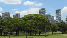 Ferramenta calcula valor econômico de floresta urbana