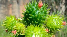 Estudo mapeia plantas decorativas tóxicas em SP