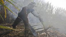 Cortadores de cana expõem a superfície ocular nas queimadas
