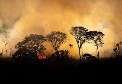 Se nada mudar, Pantanal voltará a queimar em 2021