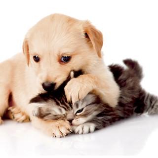 quadro-animais-gato-e-cachorro-44x30-cm-quadro