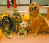 Cães terapeutas na brinquedoteca do IPq