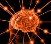 nota envelhevimento cerebro
