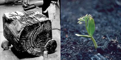 fotos: reprodução