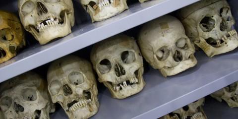 Museu de Anatomia Humana