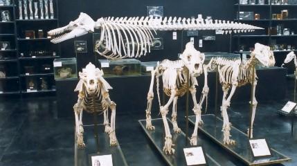 Museu de Anatomia Veterinária